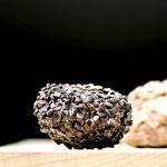truffels15