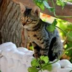 cat-on-stone